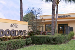pet day care in palm beach